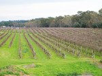 "Pruning underway at  "" Nindethana "" Mclaren Flat South Australia"